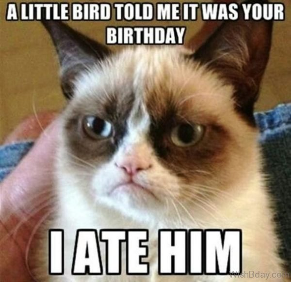 A Little Bird Told Me It Was Your Birthday