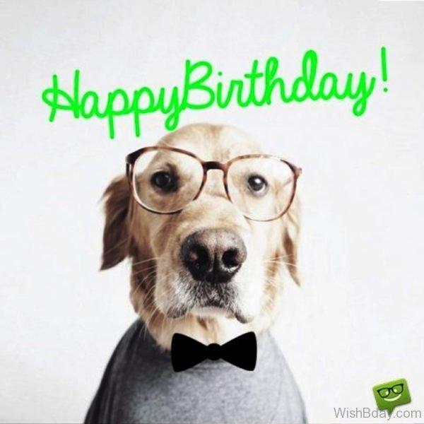 Happy Birthday Dog Image