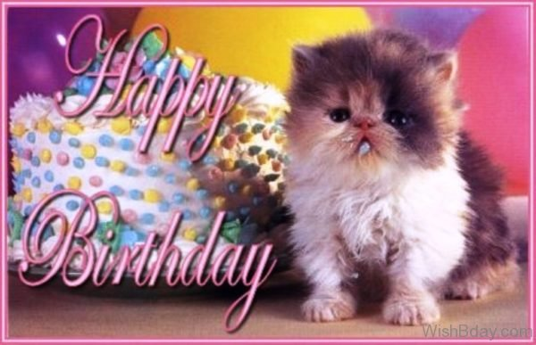 Happy Birthday Nice Cat Birthday Image