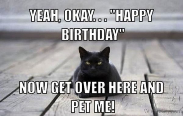 Happy Birthday Now Get Over Here And Pet Me