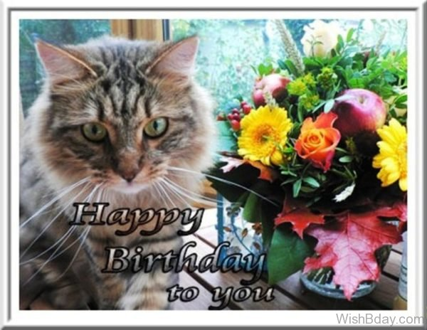 Happy Birthday To You Cat Image