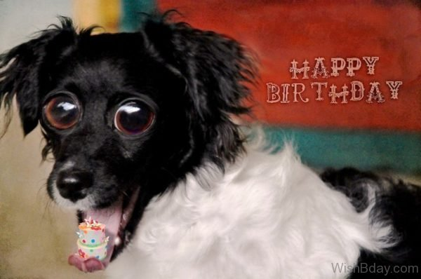 Happy Birthday Wishes For Dog Picture