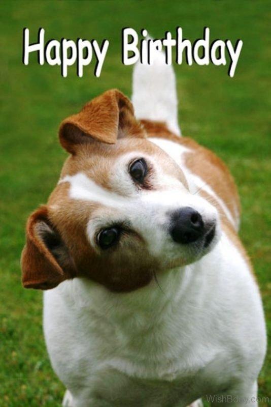 Happy Birthday Wishes With Dog Photo