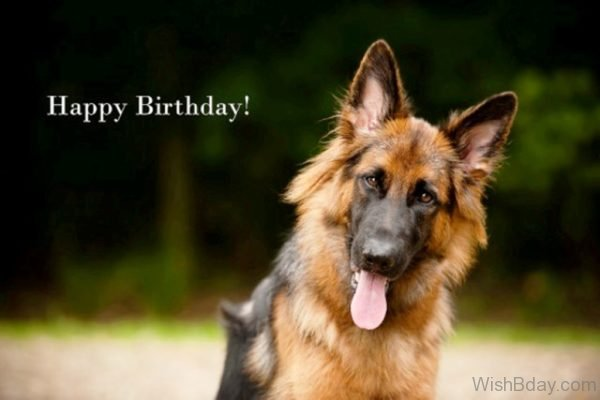 Happy Birthday Wishes With Dog Pic