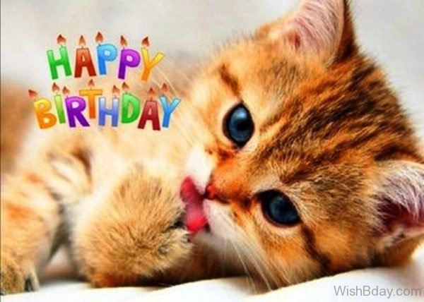 Happy Birthday With Cute Cat