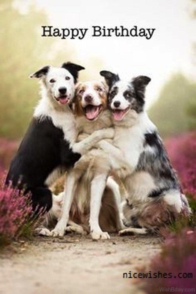 64 Dog Birthday Wishes - photo#25