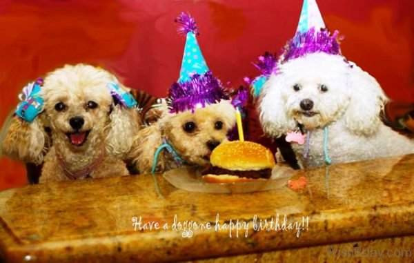 Have A Doggone Happy Birthday