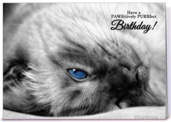 Have a Pawstively Purrfrct Birthday