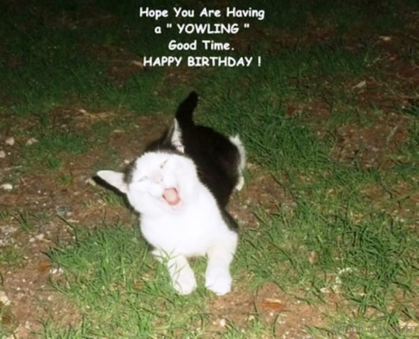 Hope You Are Having A Yowling Good Time Happy Birthday