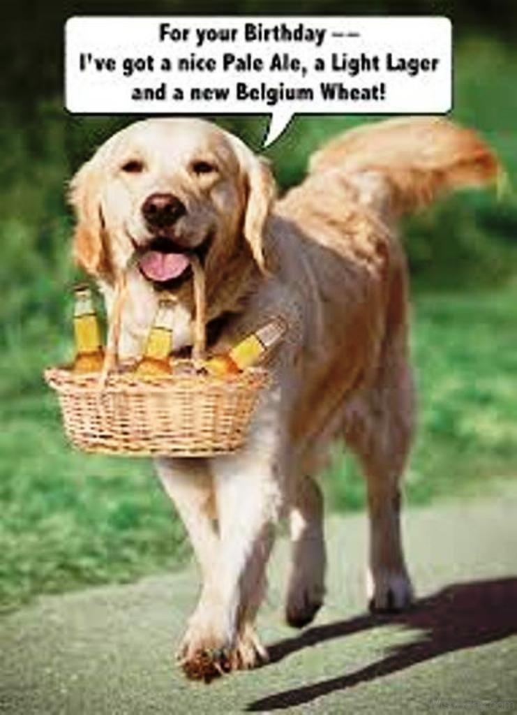 Happy Birthday Cat Dog Pic Funny