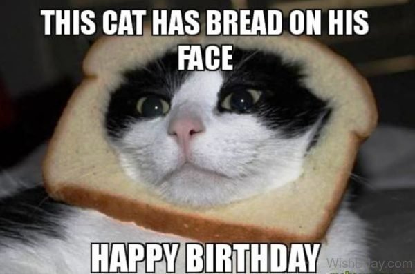 The Cat Has Bread On His Face