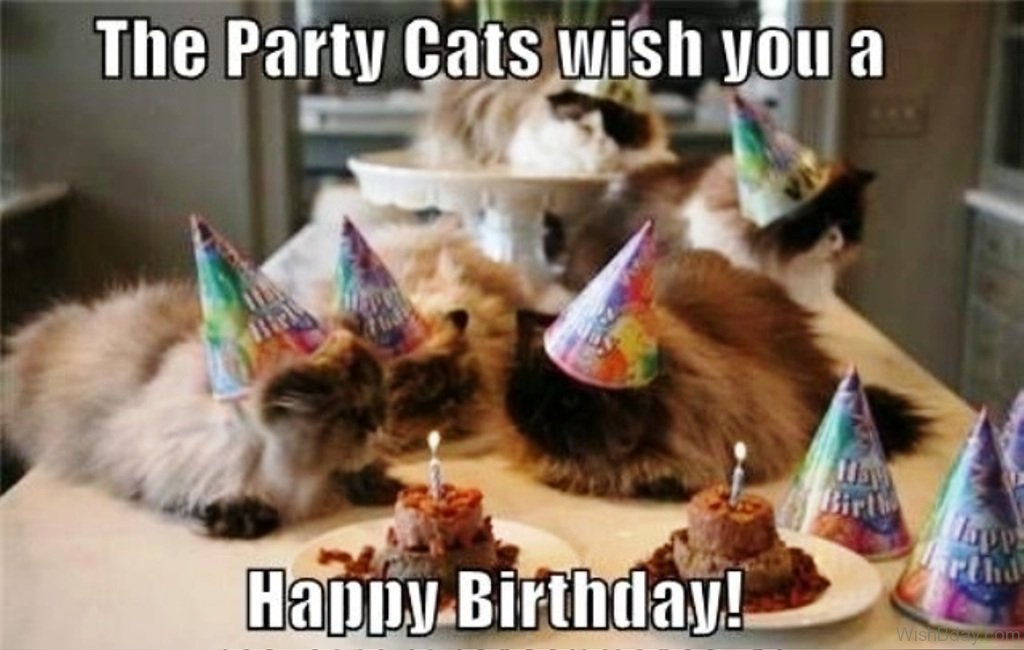The Party Cats Wish You A Happy Birthday