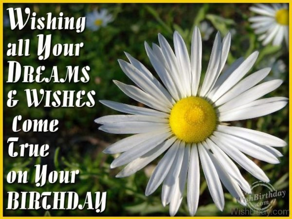 Wishes All Your Dreams Come True